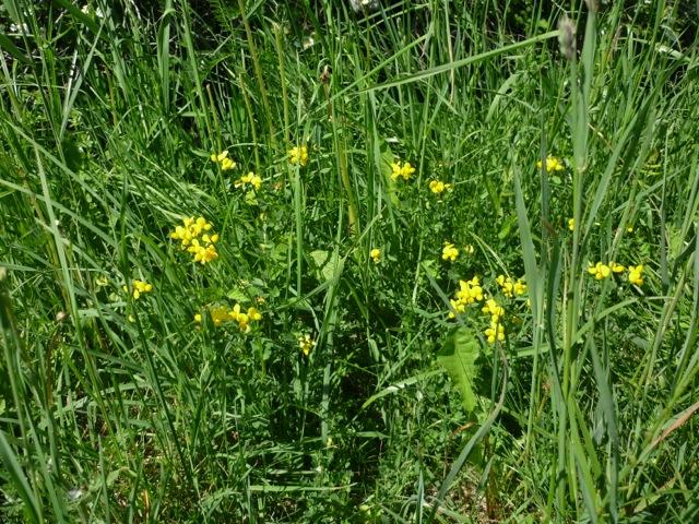 Bilder zum besuch der g rtnerei b ck kreisverband f r gartenbau und landespflege starnberg - Gartenbau starnberg ...