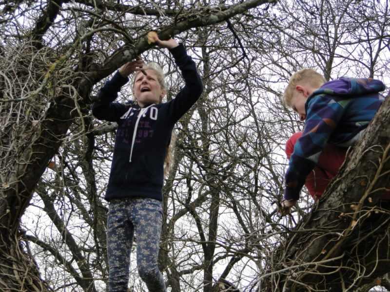 Obstbaumschnittkurs in bretbunn kreisverband f r gartenbau und landespflege starnberg - Gartenbau starnberg ...