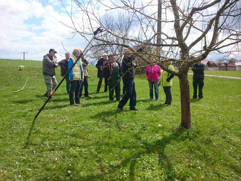 Baumschneidekurs in machtlfing kreisverband f r gartenbau und landespflege starnberg - Gartenbau starnberg ...